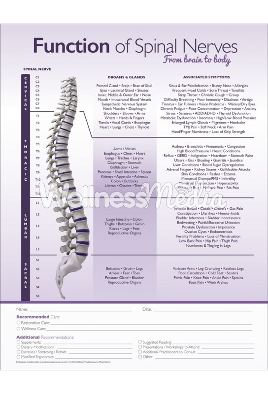 Function of Spinal Nerves Chiropractic ROF Handout