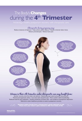 Changes During The 4th Trimester Poster