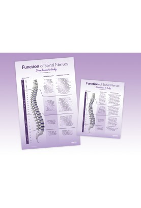 Adult Spinal Nerve Package