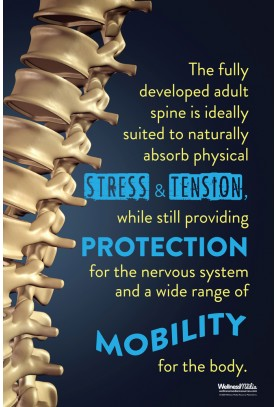 The Fully Developed Adult Spine Poster
