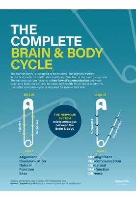 The Complete Brain and Body Cycle Poster (2)