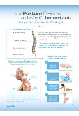How Posture Develops and Why It's Important Poster